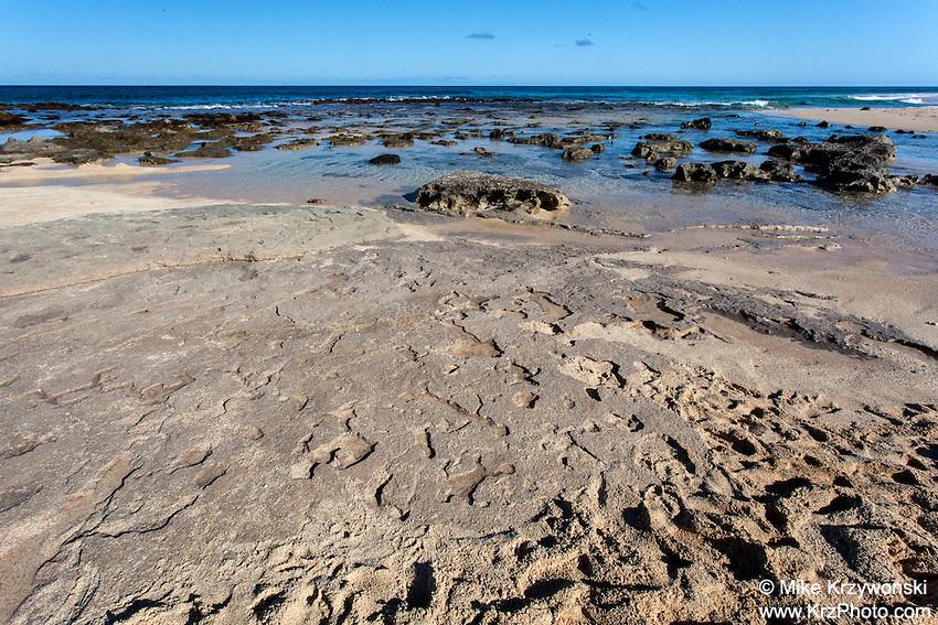 Hawaiian petroglyphs  (normally under the sand) near the shoreline at Keiki Beach, North Shore, O'ahu.