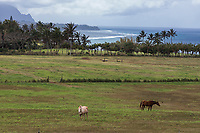 A view of Anini Beach and Princeville from Kilauea Point, Kaua'i, with horses grazing in the foreground.