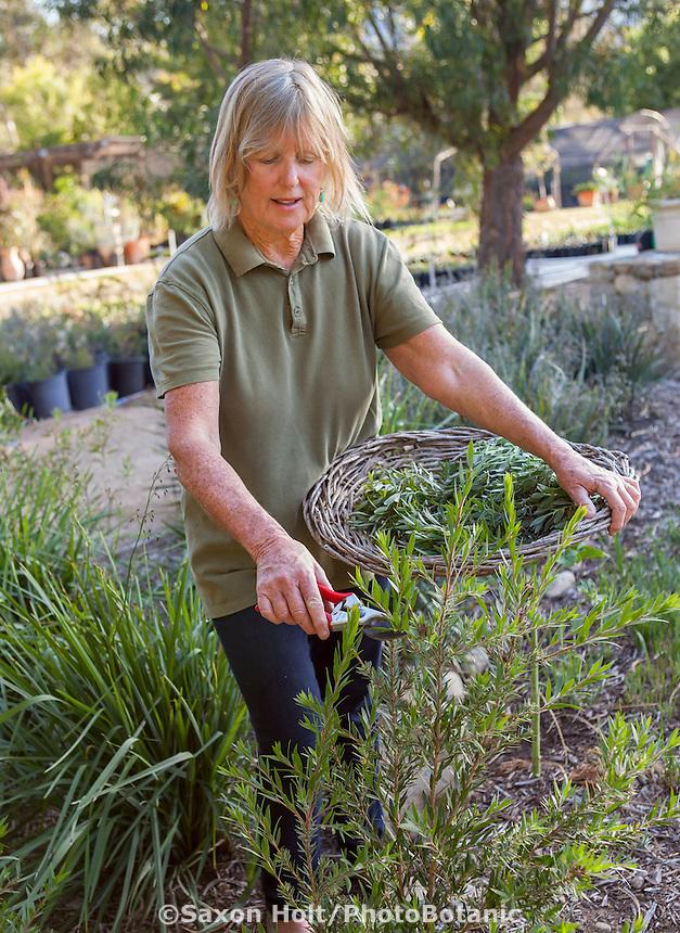 Jo O'Connell working in her Australian Native Plant Nursery, Ventura, California