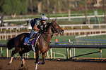 OCT 29 2014:Bobby's Kitten, trained by Chad Brown, exercises in preparation for the Breeders' Cup Turf Sprint at Santa Anita Race Course in Arcadia, California on October 29, 2014. Kazushi Ishida/ESW/CSM