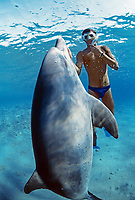 Snorkeler swimming with wild Bottlenose Dolphin, Tursiops truncatus, Nuweiba, Egypt, Red Sea., Northern Africa