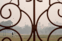 A man sprays water on plants in the grassy park outside the Red Fort in Delhi, India, on Tue., Dec. 11, 2018.