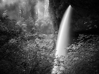 Middle North Falls in spring with fog, Silver Falls State Park, Oregon