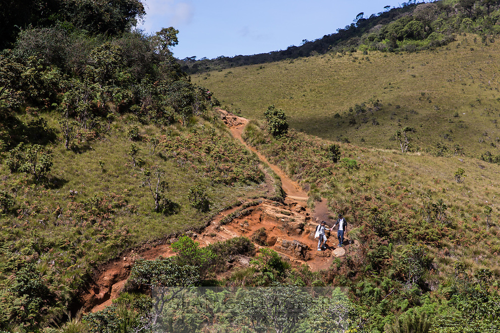 Tourists walk through the Horton Plains National Park which is one of the highest points in Sri Lanka. Historically, elephants used to roam the highland forests until they were cleared to make way for agricultural land which was later abandoned.