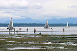 Seattle, Puget Sound, Seattleites explore the bottom of Puget Sound during spring low tide. Golden Gardens Park, Washington State; Pacific Northwest; North America,