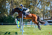 NZL-Megan Bradley rides Coronino Xtreme. Class 24: Horse 1.00m Ranking Class. 2021 NZL-Easter Jumping Festival presented by McIntosh Global Equestrian and Equestrian Entries. NEC Taupo. Saturday 3 April. Copyright Photo: Libby Law Photography