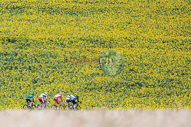 The breakaway passes by sunflower fields during Stage 17 of the 2021 Tour de France, running 178.4km from Muret to Saint-Lary-Soulan Col du Portet, France. 14th July 2021.<br /> Picture: A.S.O./Charly Lopez | Cyclefile<br /> <br /> All photos usage must carry mandatory copyright credit (© Cyclefile | A.S.O./Charly Lopez)