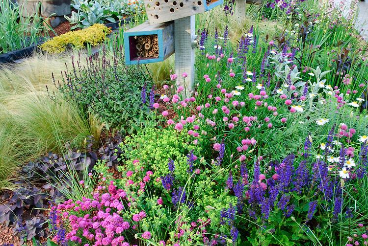 Attracting Wildlife & Birds to Backyard Garden; Allium, Scabiosa, Euphorbia, Sedum, Veronica, Stachys, Leucanthemum, ornamental grasses, many kinds of flowering plants