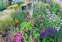 Attracting Wildlife & Birds to Backyard Garden; Allium, Scabiosa, Euphorbia, Sedum, Veronica, Stachys, Leucanthemum, ornamental grasses, many kinds of flowering plants