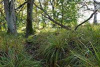 GERMANY, lower saxonia, Forest / DEUTSCHLAND, Niedersachsen, Lüneburger Heide, Wald und Moor, Ottermoor, alter Entwässerungsgraben zur Trockenlegung des Moors
