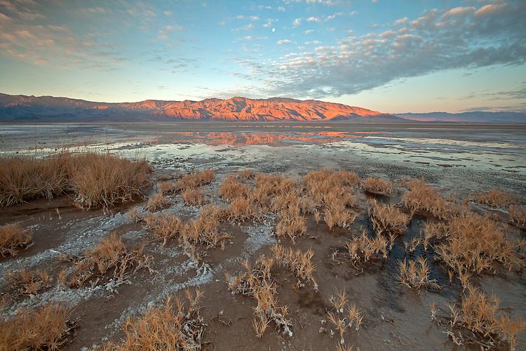 Salt grass in the Cottonball Marsh area along Salt Creek in Death Valley National Park, California, USA