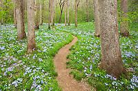 Walking with spring, Whiteoak Sink