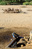 KENYA Marsabit, Rendile pastoral tribe, village Ngurunit, camels get water from water hole fenced with thorn shrub in dry river bed of river Ngurunit / KENIA, Marsabit, Dorf Ngurunit, Rendile Hirten traenken ihre Kamele an Wasserloechern im trockenen Flussbett des Fluss Ngurunit
