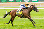 """Oct 06, 2019 :  Four Wheel Drive with Irad Ortiz Jr., wins the $150,000 Grade III Futurity Stakes, a """"Win and You're In""""  for two year olds on the turf, at Belmont Park, in Elmont, NY, October 06, 2019. Sue Kawczynski_ESW_CSM,"""