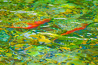 """THE LAST ACT""<br />