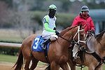 January 23, 2021: Getridofwhatailesu (3) with jockey Joseph Rocco, Jr. aboard before the running of the Pippin Stakes at Oaklawn Racing Casino Resort in Hot Springs, Arkansas. ©Justin Manning/Eclipse Sportswire/CSM