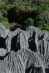 Les tsingy du massif d Ankarana, des zones de relief karstique herissees d aiguilles calcaire. La genese de ces etonnantes formations geologiques remonte à plus de 120 millions d annees lorsque Madagascar s est detache de l Afrique. L ouest de la grande ile d aujourd'hui fut plonge sous la mer et recouvert de couches de calcaire et de formations coralliennes. Un glissement tectonique souleva ensuite cette plaque gigantesque. Des millions d annees d erosion pluviales ont lacere ce plateau calcaire d un labyrinthe de lapiaz aceres..