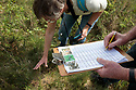 Volunteers carrying out survey work of nest sites of Narrow-headed Ants (Formica exsecta). South Devon, UK. May.