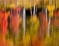 The reflection of colorful trees in Autumn is captured in Alberta Pond Michigan.