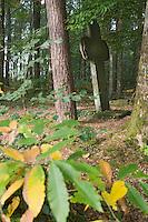 Europe/France/Bretagne/35/Ille et Vilaine/Paimpont: Forêt de Paimpont, mythique Brocéliandre croix de calvaire en pierre dans la forêt
