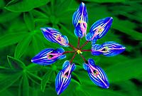 Wildflowers: A-N flora plants trees