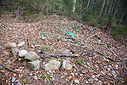"""Poor """"Leave No Trace"""" habits near Ledge Brook in the White Mountains, New Hampshire."""