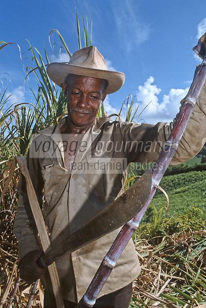 France/DOM/Martinique/Rivière-Pilote/Distillerie La Mauny: Coupe et récolte de la canne à sucre [Non destiné à un usage publicitaire - Not intended for an advertising use]