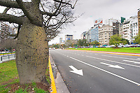 the Avenida 9 Julio Avenue of ninth of July, said to be the world's widest street, lined by trees and modern office block buildings. Strange odd bulging fat trees lining the street XXX. Buenos Aires Argentina, South America