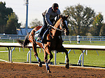 October 16, 2015:  Grand Arch, winner of the Shadwell Turf Mile, trains in preparation for the Breeder's Cup.   Candice Chavez/ESW/CSM