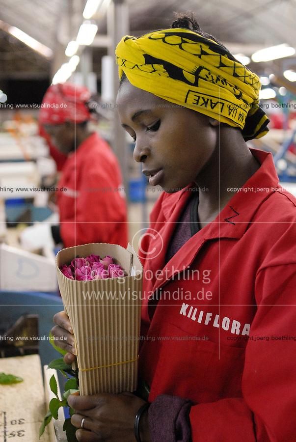 TANSANIA, Anbau von fair trade Schnittblumen Rosen in Gewaechshaus fuer Export nach Europa bei Firma Kiliflora nahe Arusha - TANZANIA Arusha, rose flower cultivation in green house at fair trade company Kiliflora for export to Europe