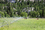 Eight Mile Ranch, along the Chewuch River norht of Winthrop in Washington's Methow Valley serves as a U.S. Forest Service mule ranch and fire base in summer, and snow park in winter.