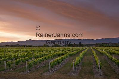 New Zealand, South Island, Marlborough Region, Renwick near Blenheim: Vineyards at dawn | Neuseeland, Suedinsel, Marlborough Region, Renwick bei Blenheim: Weinberge im Abendlicht