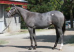 11 September 2011.  Hip #170 Unbridled's Song - Folklore filly consigned by Taylor Made Sales.