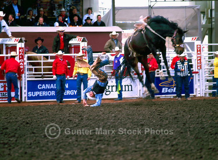 Rodeo Cowboy bucked off Bucking Horse in Saddle Bronc Riding Event at Calgary Stampede, Calgary, Alberta, Canada - Editorial Use Only