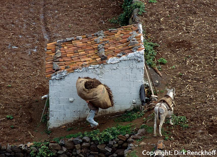 Spanien, Kanarische Inseln, Gomera, Mann mit Esel bei Vallehermoso