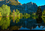 Yosemite Falls and Leidig Meadow Fir Reflected at Sunrise, Spring Flood in Leidig Meadow, Yosemite National Park