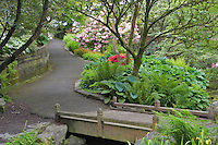 Bridge and path with bloominmg rhododendrons at Crystal Gardens. Portland