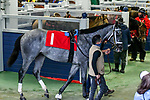 February 27, 2021 #1 Essential Quality in the paddock for the Southwest Stakes (Grade III) at Oaklawn Racing Casino Resort in Hot Springs, Arkansas. Ted McClenning/Eclipse Sportswire/CSM