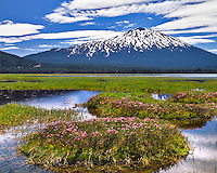 Mt Bachelor and mountain heather in Sparks Lake, Oregon