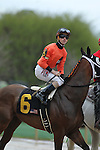 HOT SPRINGS, AR - MARCH 12: Jockey Channing Hill aboard Marquee Miss (6) during post parade in the Honeybee Stakes at Oaklawn Park on March 12, 2016 in Hot Springs, Arkansas. (Photo by Justin Manning)