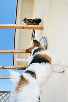 cat and dog, domestic cat and terrier, Germany