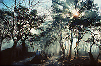 .Sunrise at Swayambu Steps, Swayambunath, Kathmandu, Nepal. The sun bursts thro' early morning mists in the woods around the stone steps leading down from the Buddhist shrine to the town...