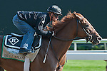 Dullahan puts in a four furlong breeze in 45.97, preparing for the 2012 GI Belmont Stakes at Belmont Park in Elmont, NY.