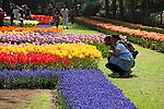 Jährliche Blumenschau im Keukenhof, vor allem vor Tulpen, Lisse, Provinz Nord-Holland, Niederlande