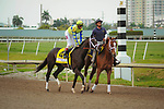 HALLANDALE BEACH, FL - APRIL 01: Always Dreaming, trained by Todd Pletcher, with John Velazquez aboard in the post parade for the 66th running of the $1 million Xpressbet Florida Derby at Gulfstream Park on April 01, 2017 in Hallandale Beach, Florida. (Photo by Carson Dennis/Eclipse Sportswire/Getty Images)