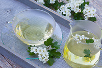 Weissdornblüten-Tee, Weißdornblüten-Tee, Weissdorn-Tee, Weißdorn-Tee, Tee, Kräutertee, Blütentee, Heiltee, Weißdorn-Blüten, Weißdornblüten, Weissdorn-Blüten, Weissdornblüten, Eingriffliger Weißdorn, Eingriffeliger Weißdorn, Weissdorn, Weiß-Dorn, Weiss-Dorn, Hagedorn, Crataegus monogyna, hawthorn, common hawthorn, oneseed hawthorn, single-seeded hawthorn, English Hawthorn, May, tea, herb tea, herbal tea, L'Aubépine monogyne, L'Aubépine à un style
