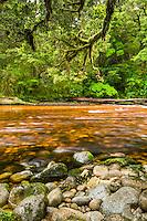 Orange brown Oparara River and rainforest in Oparara Valley, Kahurangi National Park, West Coast, Buller Region, New Zealand
