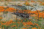 California Poppy Reserve, Antelope Valley, CA