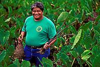 A Big Island farmer smiles holding a huge taro or kalo plant in a loi (Hawaiian taro field) located in Pahoa. Sacred to the native Hawaiians as the ancient food staple of the early Polynesians, taro is used for poi.