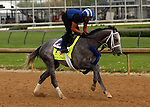 LOUISVILLE, KY - APRIL 19: Mohaymen (Tapit x Justwhistledixie, by Dixie Union) gallops with exercise rider Miguel Jaime at Churchill Downs, Louisville KY. Owner Shadwell Stable, trainer Kieran McLaughlin. (Photo by Mary M. Meek/Eclipse Sportswire/Getty Images)